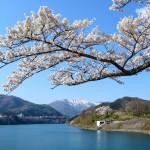 赤谷湖と桜