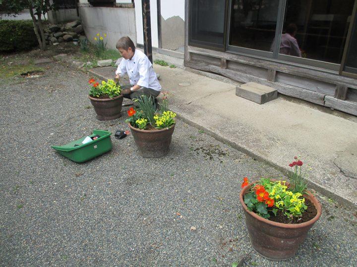 女将の花植え